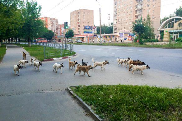 собаки1